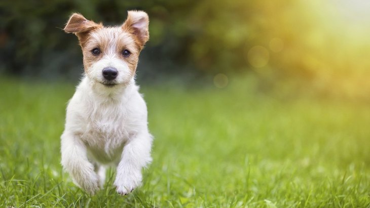 これから犬を迎えたい人へのアドバイス3つ