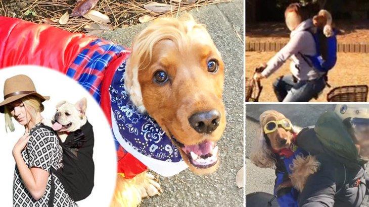 タレント犬コーダのテイクわん! ~世界最高の犬用リュック~