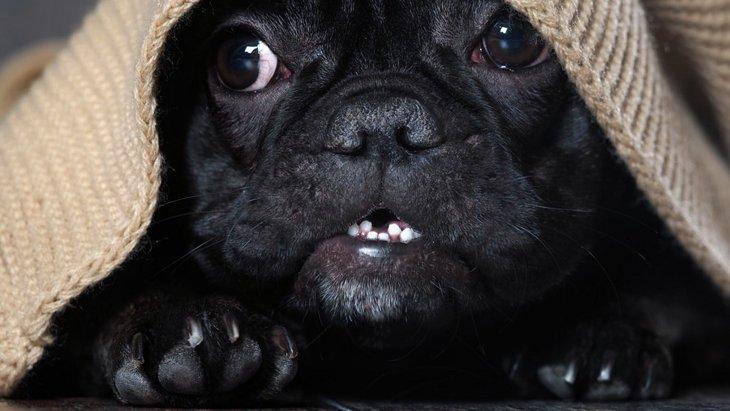 犬もトラウマがある!犬のPTSDとは?