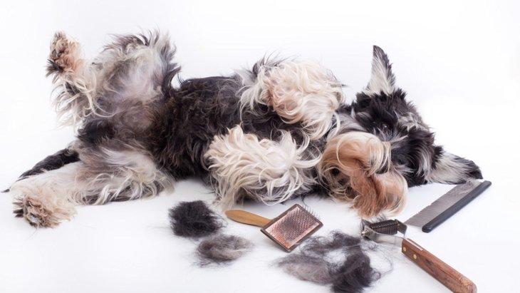ただ生えてるだけじゃない!犬の毛の役割