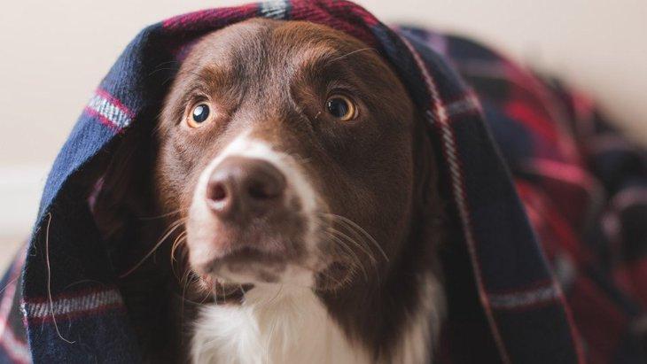 犬がパニックになる3つの原因と対処法