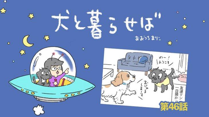 犬と暮らせば【第46話】「なわばり」
