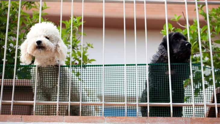 犬にとって『ベランダ』は超危険?!起こりうる3つのトラブルと回避する方法