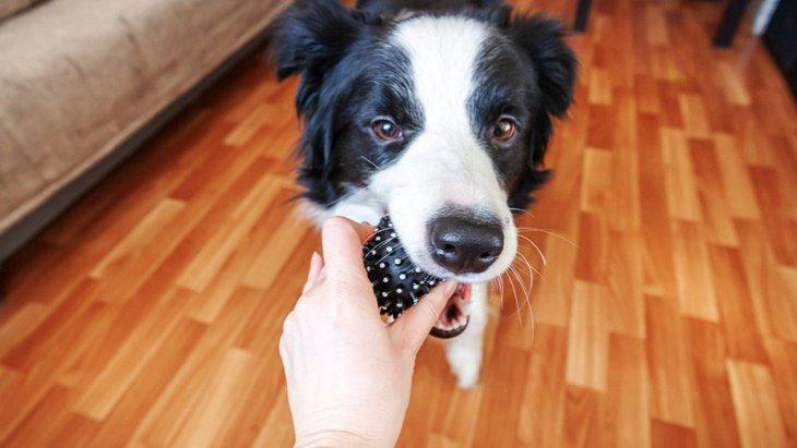 犬のニーズに応えて世話をすることは飼い主の幸福感を高めるという研究結果
