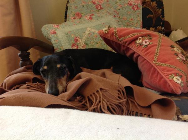 犬も関節リウマチになる!気をつけたい犬種と予防法