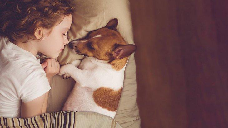 犬と一緒に寝るのはNG?考えられるメリット・デメリット