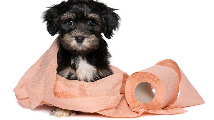 犬用トイレ袋・スコップの人気ランキング !おすすめ商品TOP5