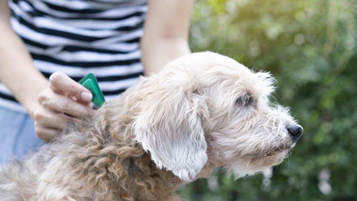 犬のフィラリア症とは その症状や予防、治療について