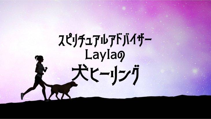 LAYLAの犬占い あなたのわんちゃんを鑑定します!☆鑑定モニター募集☆