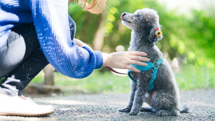犬が『散歩から帰りたくない』と思っている時にする仕草や行動4選