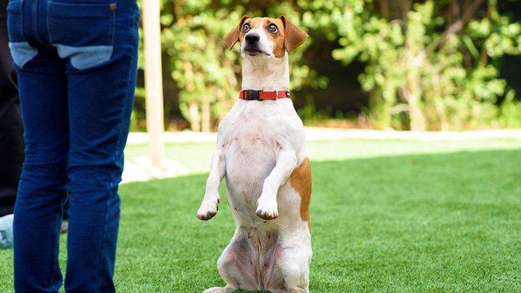 た、立った!犬が後ろ足で立つときの気持ちとは?