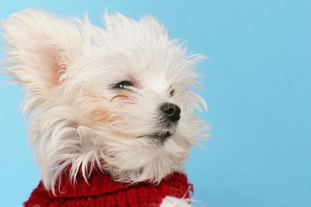 家族が犬アレルギーに…一緒に暮らすための対処法とは