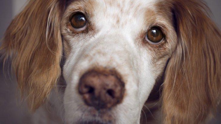 指示に従うけど…実は犬が不満に思っていること2つ