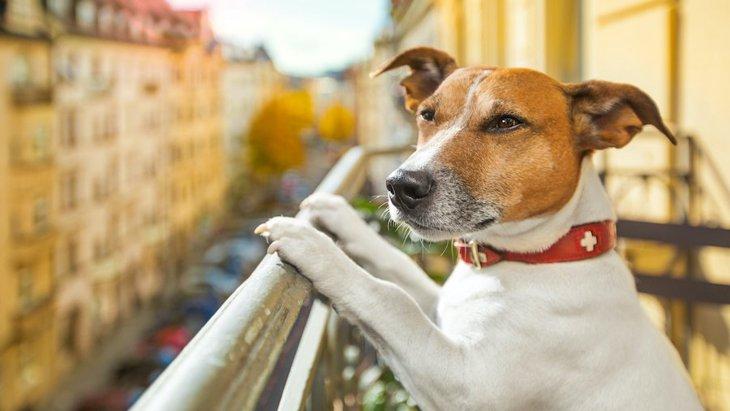 犬をベランダに出すのは危険!やるべき対策とは?