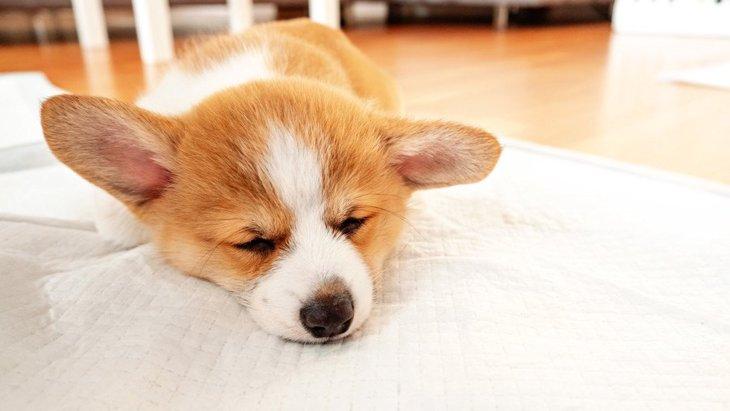 犬が『トイレを我慢』してしまう…4つの理由と適切な対処法