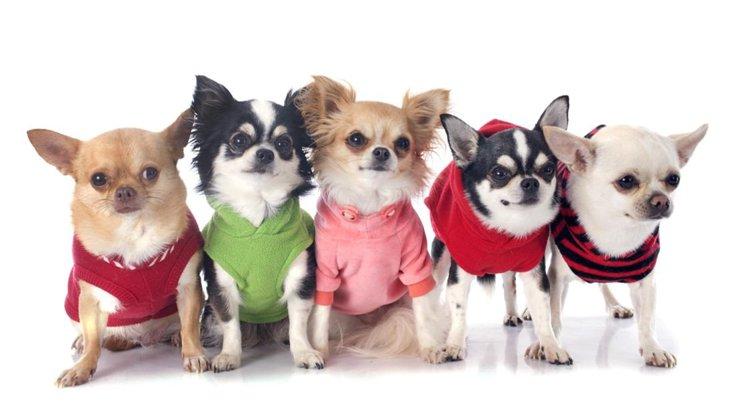 犬服ブランド!おすすめ人気ランキング10選
