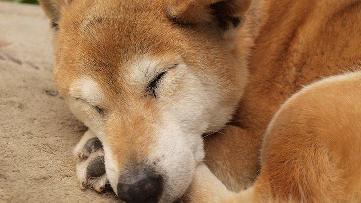 犬の『認知症サイン』5選!今すぐ確認したい症状チェックリスト