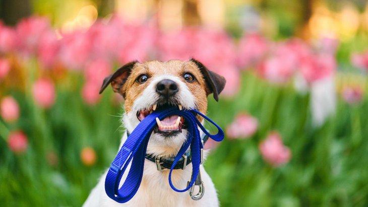 犬の散歩中の『絶対NG行為』4選