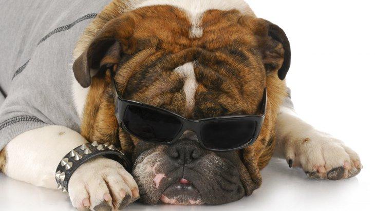 犬の擬人化について