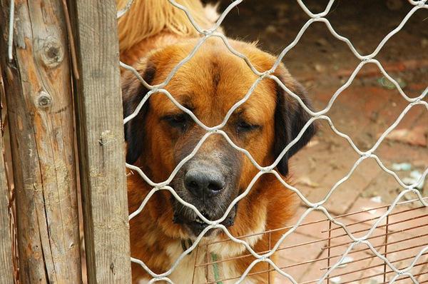 保護犬について考える