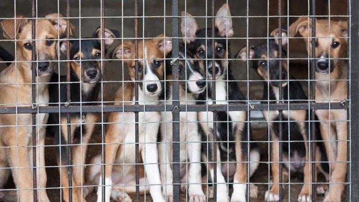 不要な犬を回収する制度を知っていますか?