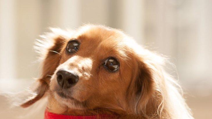犬が飼い主に触ってほしい時にする仕草6つ | わんちゃんホンポ