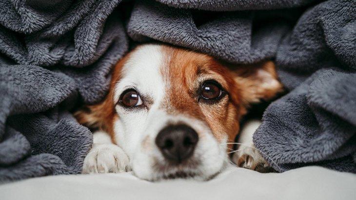 犬が飼い主を避けるのには理由がある?!3つの理由と適切な対処法