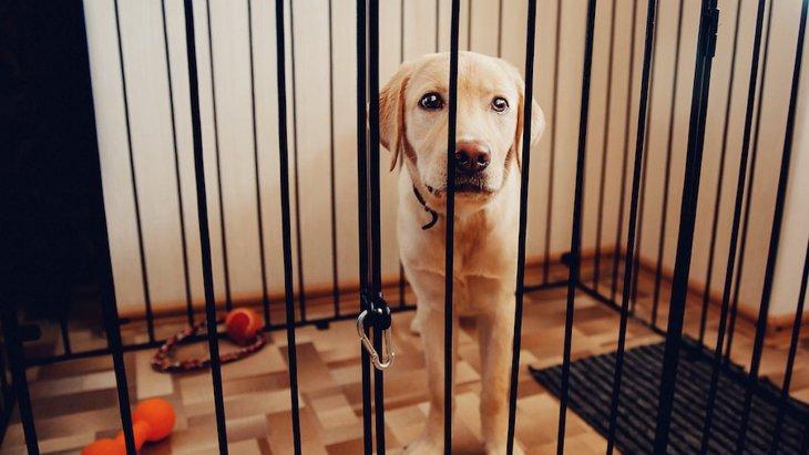 買うべきではない『犬のケージ』の特徴2選
