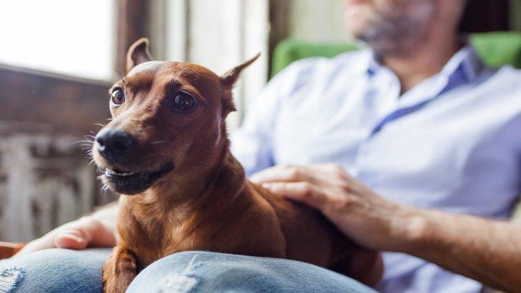 犬が飼い主の膝に乗っかってくる心理4選