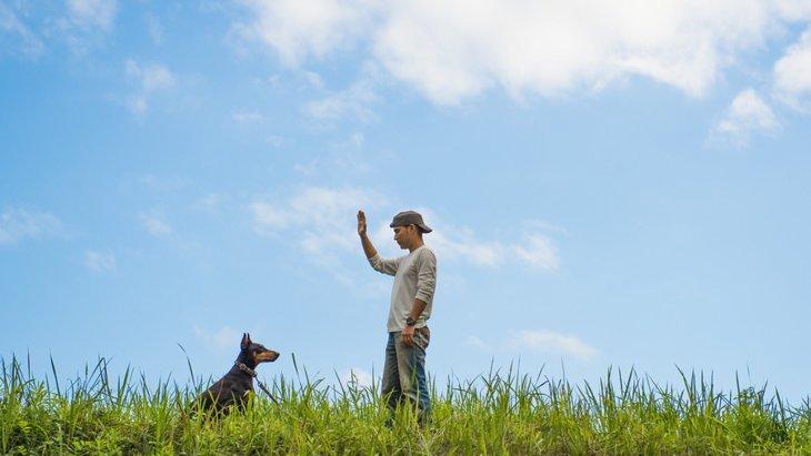 保護犬がなつかないときの対策や信頼関係の築き方