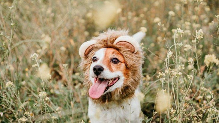 犬への正しい『褒め方』とは?やってはいけないNG行為やコツとは?
