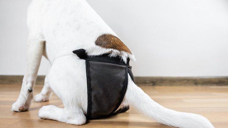 犬用おむつの正しい着け方!気を付けたい注意点まで