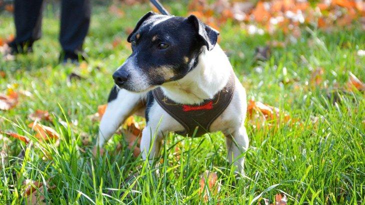 犬が自分の『ウンチ』を食べてしまう理由4つ!どうやって対処したらいいの?