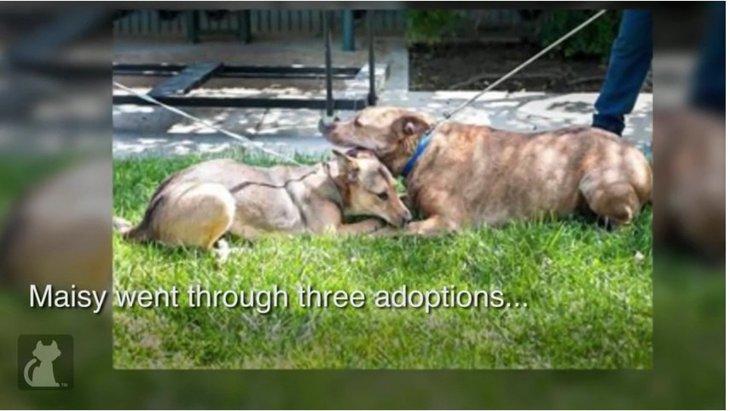 ネグレクトの末、シェルターに持ち込まれた2匹の犬たち