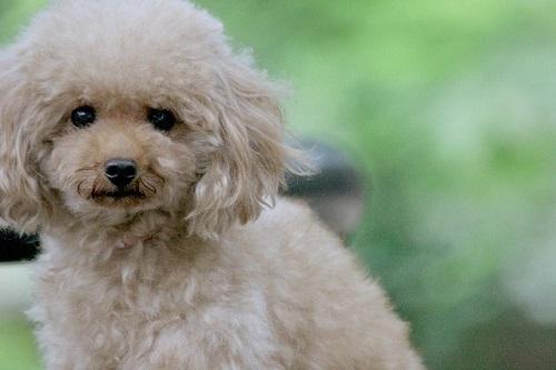犬用バリカン! 選び方やおすすめの商品を紹介