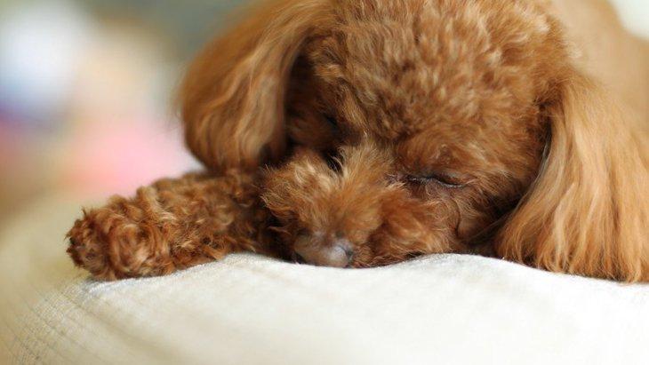 いつ見ても寝てる気がする…。犬は1日に何時間寝るの?