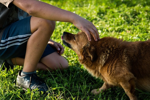 犬が撫でられて、喜ぶ所と嫌がる所があるのを知っていますか?