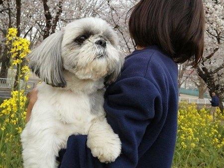 1年で見違えるように生き生きとした臆病な保護犬