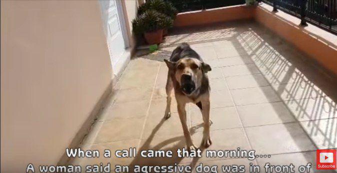 おびえと自己防衛しか知らなかった…攻撃的な野良犬が1日で大変身!