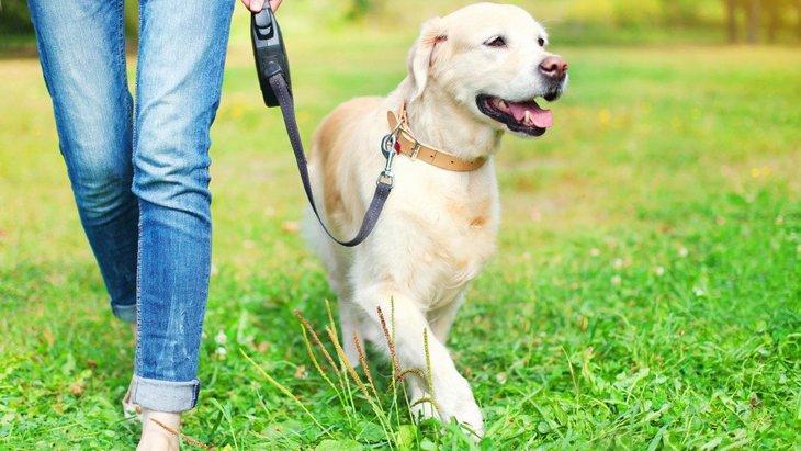 犬が散歩中にキョロキョロする心理とやめさせる方法