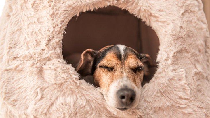 犬の寝床を快適にする5つの方法