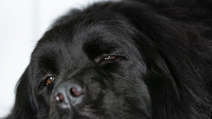 犬が『無気力な表情』をしている時の心理3選
