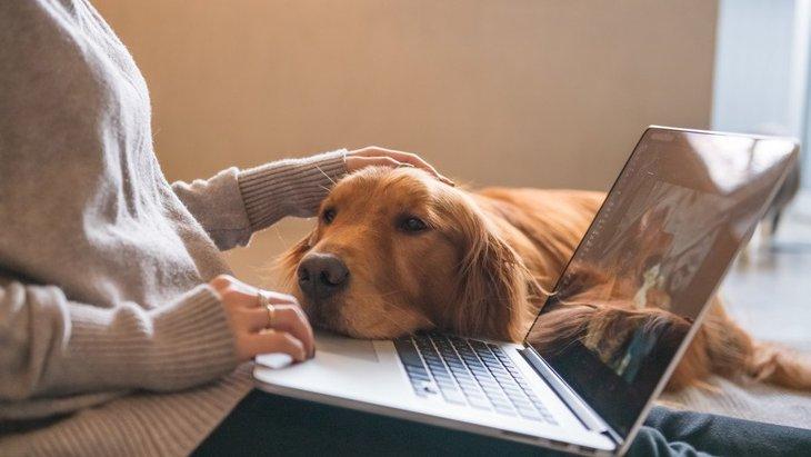 犬が優しく触ってくる時の心理5つ
