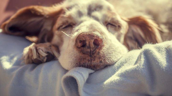 「犬が死んでしまう夢」の意味や心理状態とは