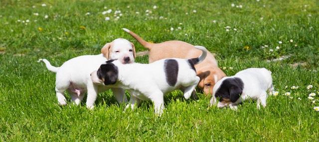 子犬の社会化はどのくらい知られて実行されているんだろう?【研究結果】