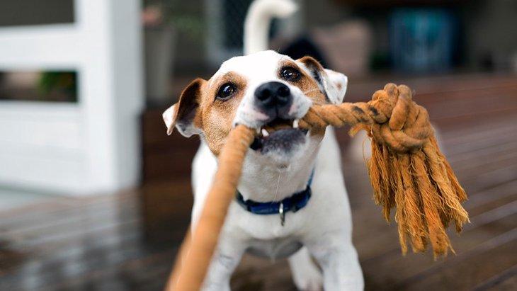 犬がお気に入りのおもちゃに見せる反応7つ