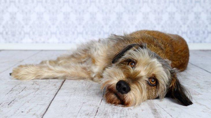 犬がペットホテルに預けられた時の心理3つ