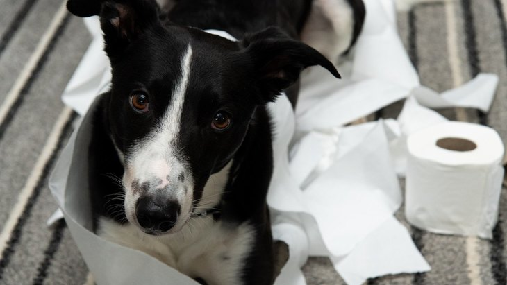 犬が『たまにトイレに失敗してしまう』時の心理6選