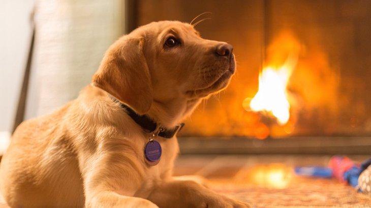 犬の火傷 原因・症状と家で出来る対応について