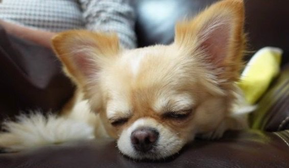 癒やし度MAX!愛犬とばぁばの1日♡ほのぼの密着動画に愛おしいが止まらない!